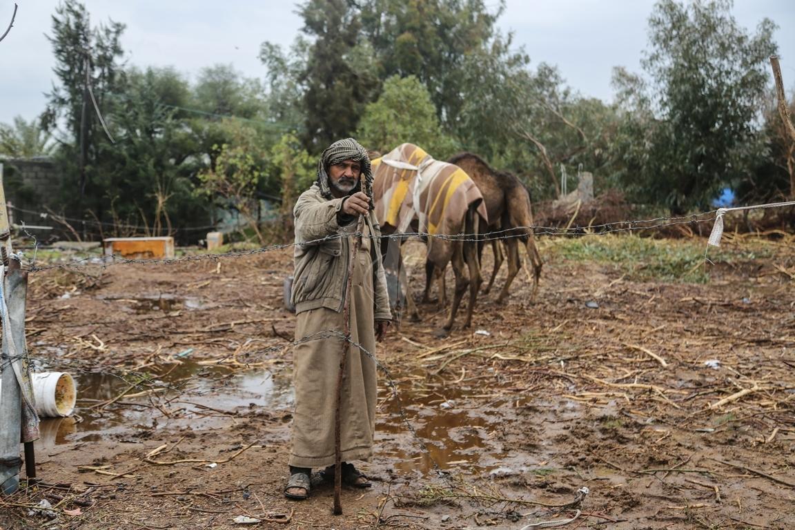 مواطن يرعى الإبل  رغم برودة الطقس وغزارة الأمطار (39191044) 