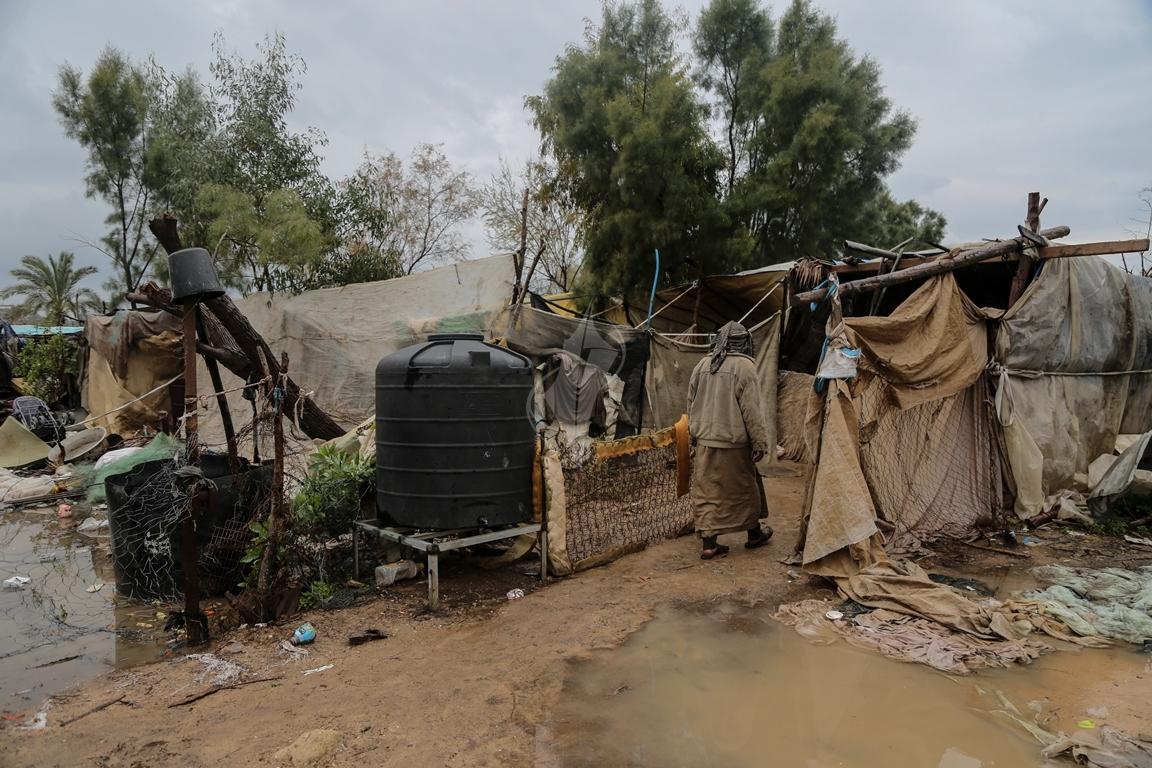 مواطن يرعى الإبل  رغم برودة الطقس وغزارة الأمطار (39191047) 