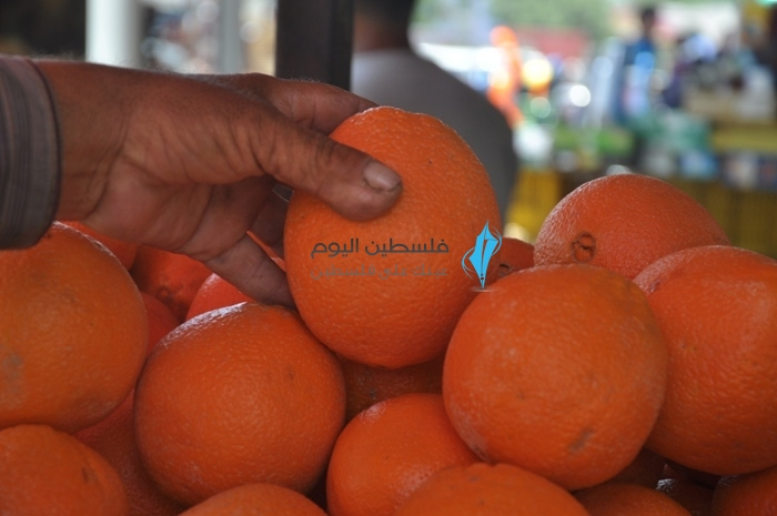 برتقال الشتاء في الصيف