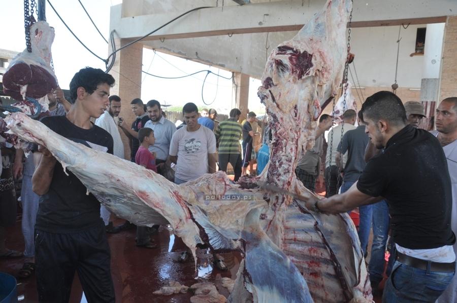ذبح الأضاحي  عيد الاضحى المبارك