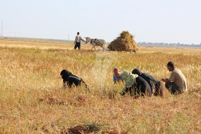 مزارعون (8)