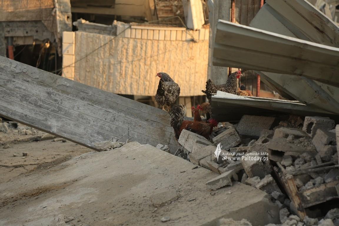 منازل المدمرة إثر القصف (21).JPG