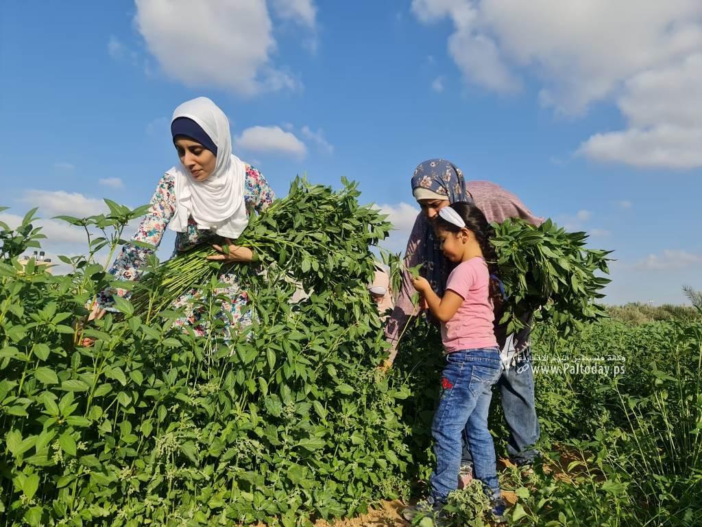 فتيات من غزة يُقمن مشروع زراعي تحدياً للبطالة (4).jpeg