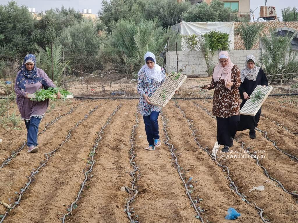 فتيات من غزة يُقمن مشروع زراعي تحدياً للبطالة (6).jpeg