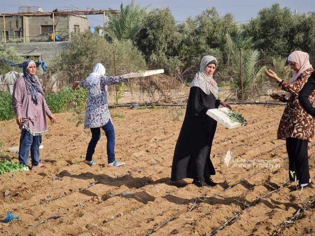 فتيات من غزة يُقمن مشروع زراعي تحدياً للبطالة (7).jpeg