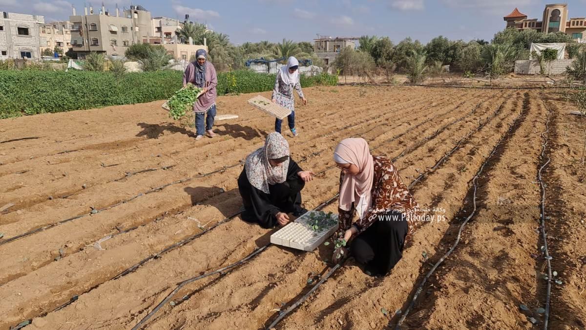 فتيات من غزة يُقمن مشروع زراعي تحدياً للبطالة (9).jpeg