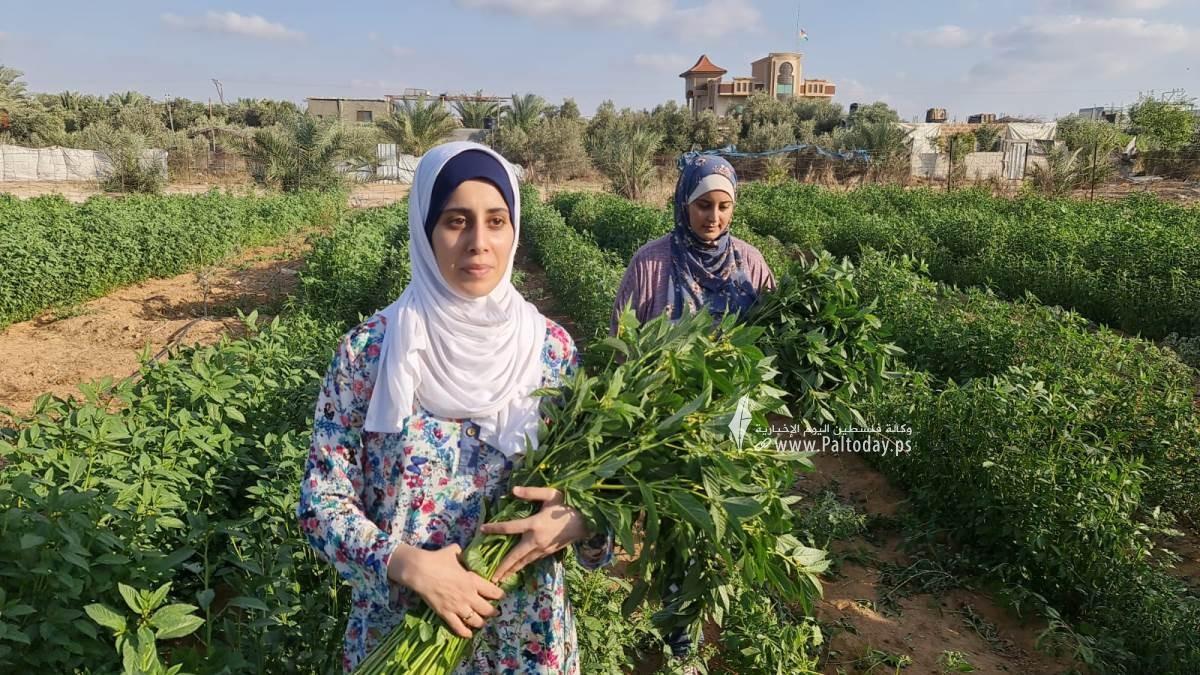 فتيات من غزة يُقمن مشروع زراعي تحدياً للبطالة (1).jpeg