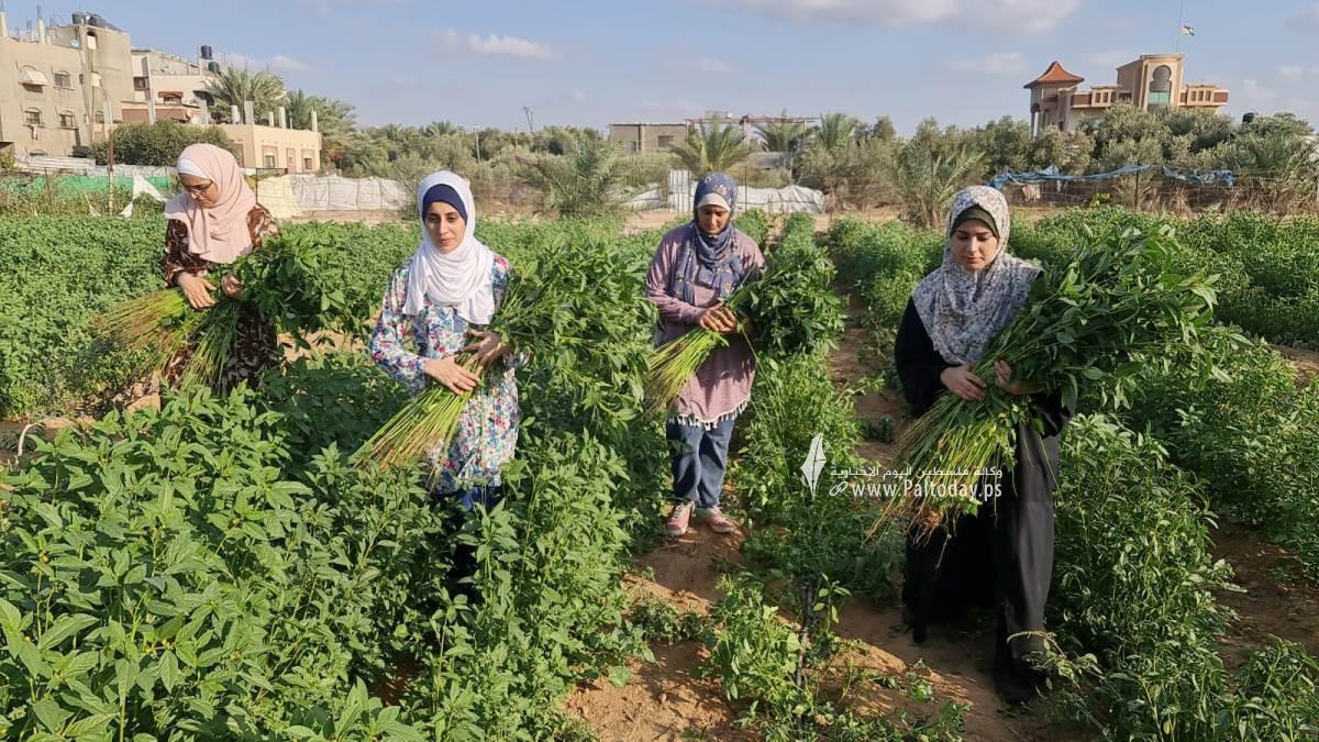 فتيات من غزة يُقمن مشروع زراعي تحدياً للبطالة (2).jpeg