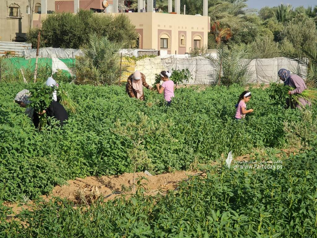 فتيات من غزة يُقمن مشروع زراعي تحدياً للبطالة (5).jpeg