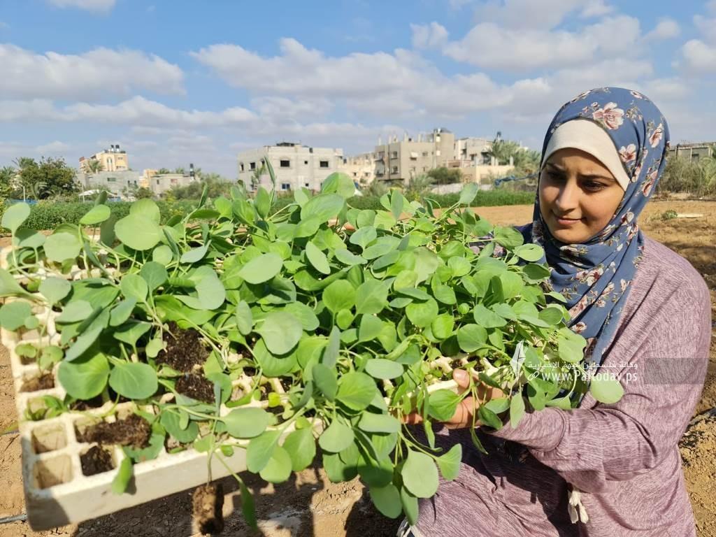 فتيات من غزة يُقمن مشروع زراعي تحدياً للبطالة (12).jpeg