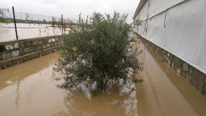 مزارع غزة