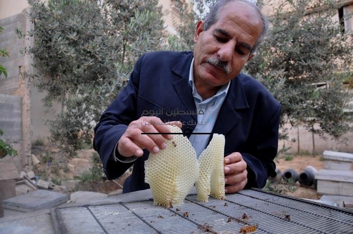 العلاج بسم ولسعات النحل