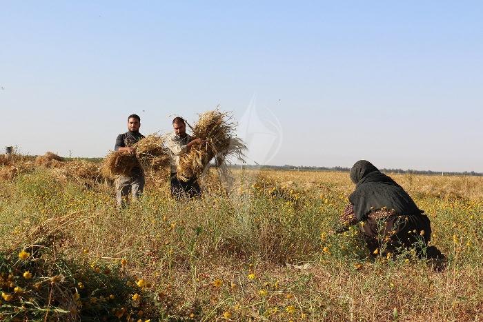 مزارعون (4)