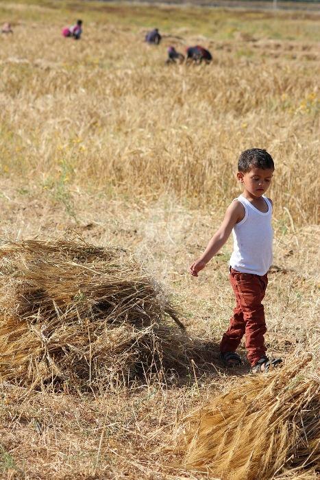مزارعون (7)
