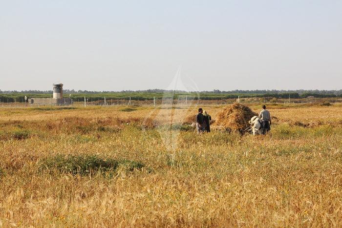 مزارعون (1)