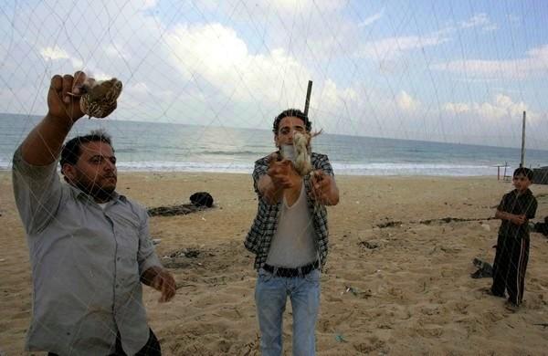 صيد الفر