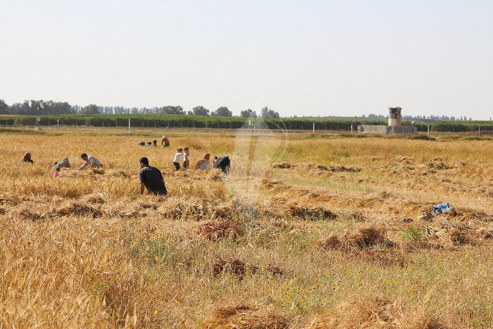 مزارعون (9)