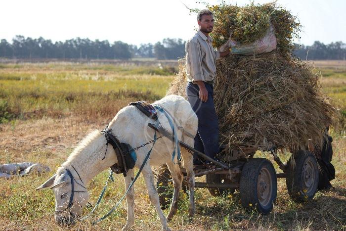مزارعون (11)