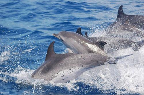 أسماك الدلفين